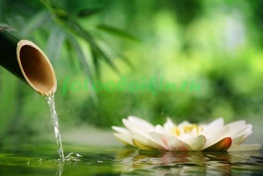 Фотообои Водная лилия на озере