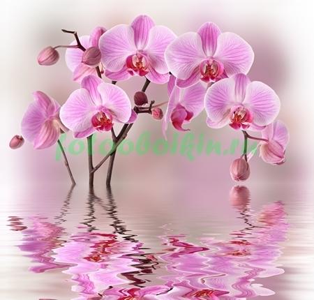 Фотообои Орхидея с отражением на воде