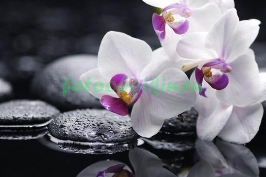 Фотообои Бело-розовая орхидея с галькой