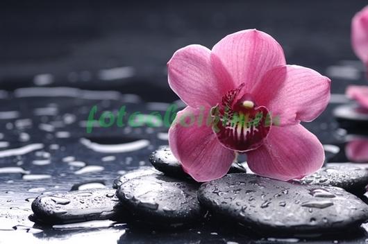 Фотообои Розовая орхидея с галькой