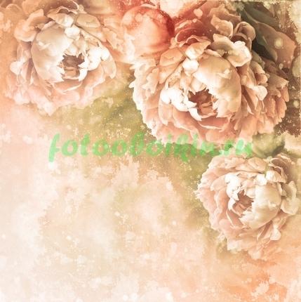 Фотообои Нарисованные пастельные пионы