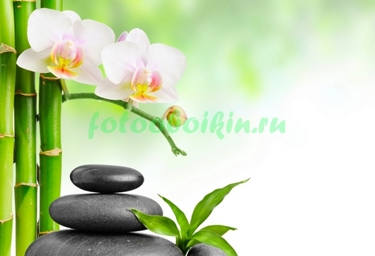 Фотообои Цветущий бамбук сад камней