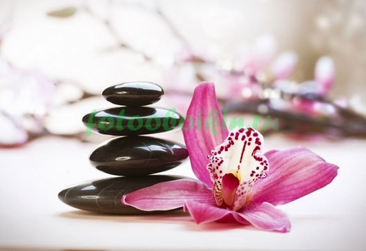 Фотообои Один цветок розовой орхидеи