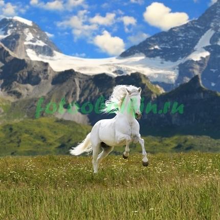 Фотообои Белая лошадь в горах