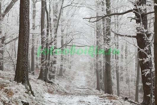 Фотообои Заснеженный лес
