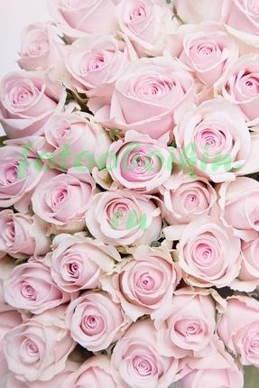 Фотообои Нежно розовые розы