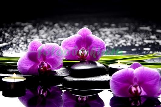 Фотообои Розовая орхидея с галькой и отражением