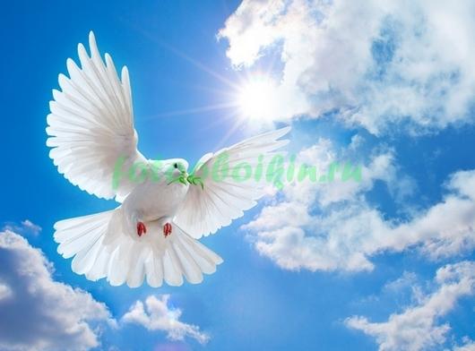 Фотообои Белый голубь