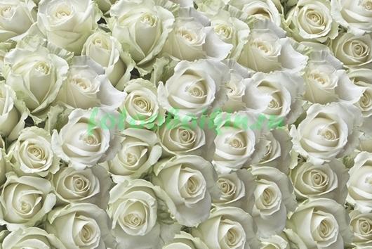 Фотообои Миллион роз