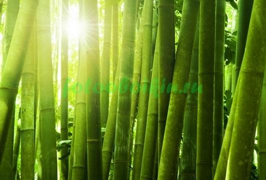 Фотообои Солце через бамбук