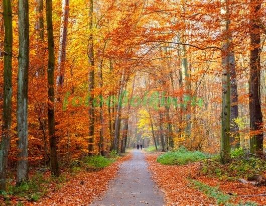 Фотообои Парк осенью