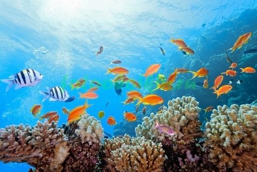 Фотообои Яркие рыбки