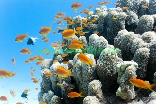 Фотообои Оранжевые рыбки