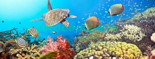 Фотообои Водная черепаха