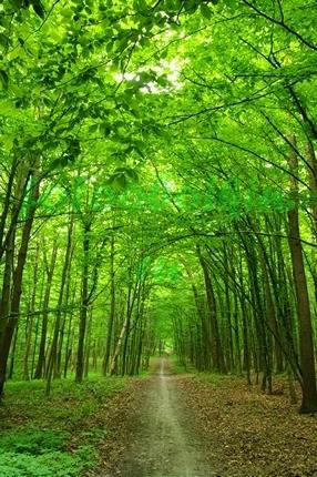 Фотообои Зелёный лес