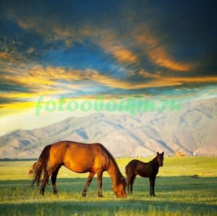 Фотообои Лошади пасутся на поле