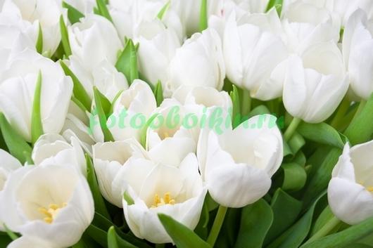 Фотообои Белоснежные тюльпаны