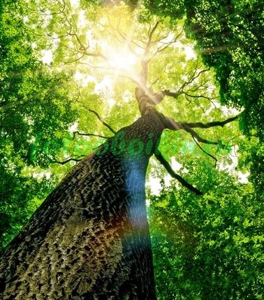 Фотообои Могучее дерево