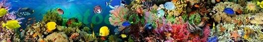 Фотообои Подводная панорама