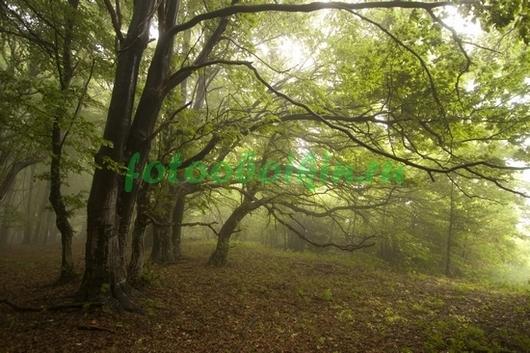 Фотообои Сумерки в лесу