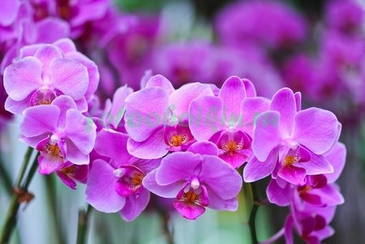 Фотообои Ветка розовой орхидеи