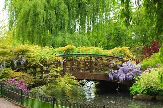 Фотообои Японский мостик