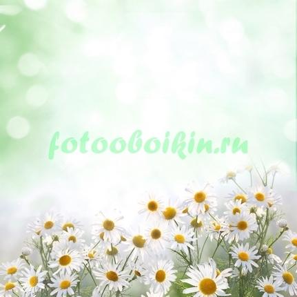 Фотообои Ромашки красивое фото