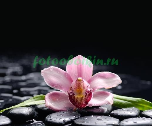 Одна орхидея