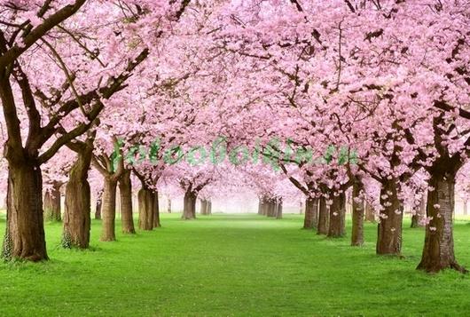 Фотообои Вишнёвый сад