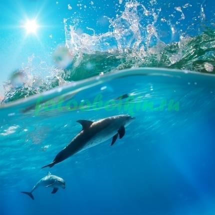 Фотообои Дельфины под волной
