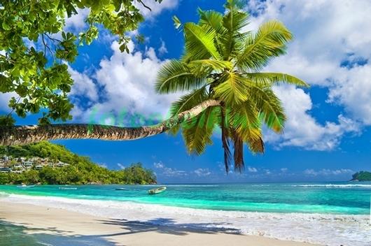 Фотообои Длинная пальма