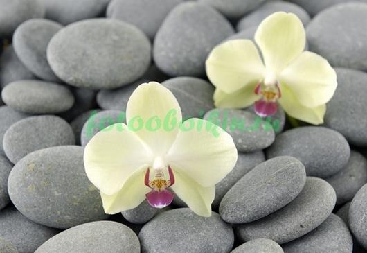 Фотообои Две орхидеи на серой гальке