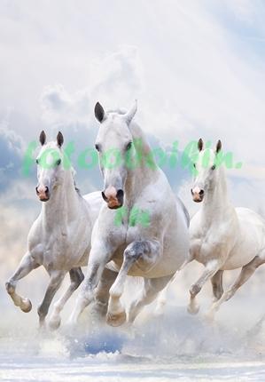 Фотообои Три белых коня