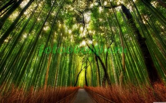 Фотообои Тропа через бамбук