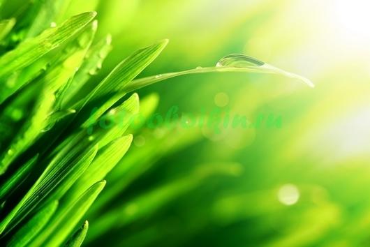 Фотообои Трава в контурном свете