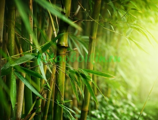 Фотообои Летний бамбук
