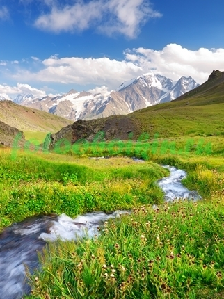 Фотообои Альпийский луг