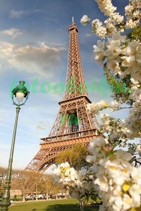 Фотообои Цветущая яблоня на фоне Эйфелевой башни
