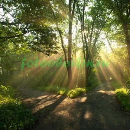 Фотообои Развилка лесных дорог