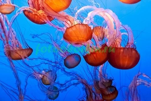 Фотообои Медузы