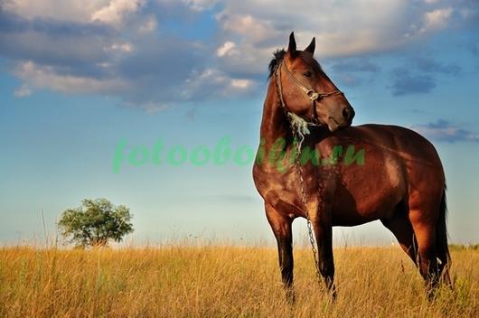 Фотообои Гнедая в поле