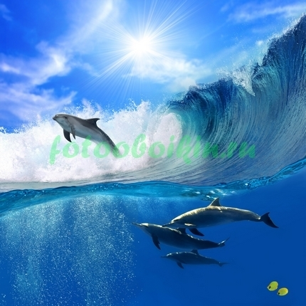 Фотообои Игра дельфинов