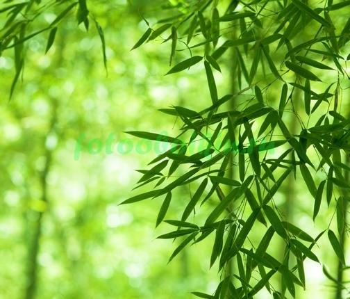 Фотообои Зелень