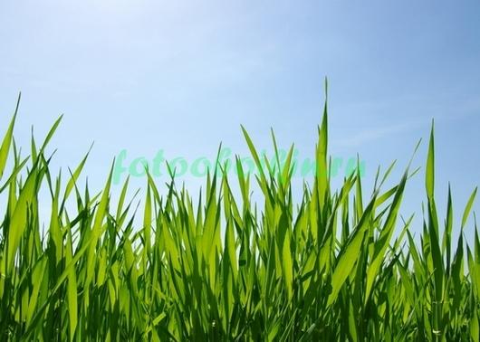 Фотообои Трава и небо