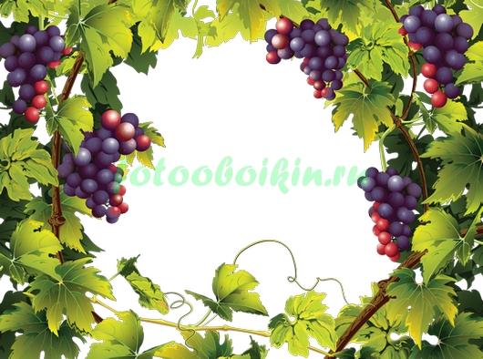 Фотообои Виноград