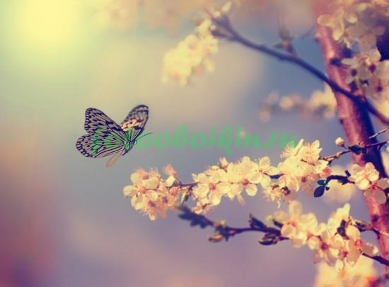 Фотообои Бабочка на ветке
