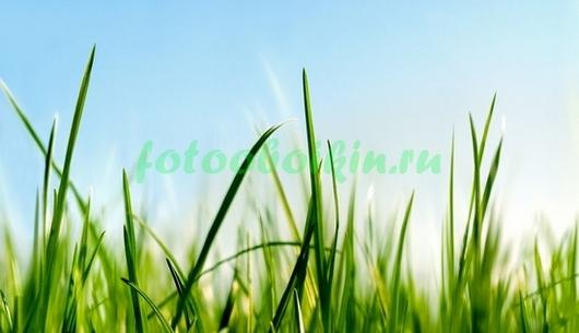 Фотообои Травинки на ветру