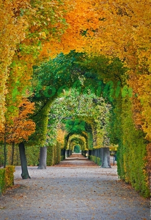 Фотообои Арка из деревьев