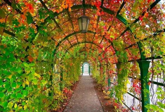 Фотообои Арка садовая