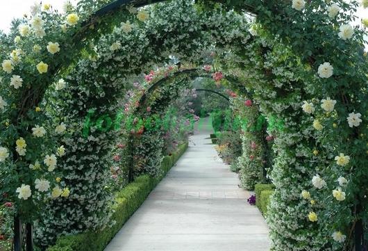 Фотообои Арка с белыми розами